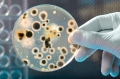 The process of microbial fermentation is a critical component of industrial biotechnology.