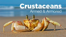 8-25-14 NEWSROOM, CRUSTACEANS